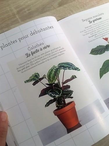 plantes débutantes végétale thérapie