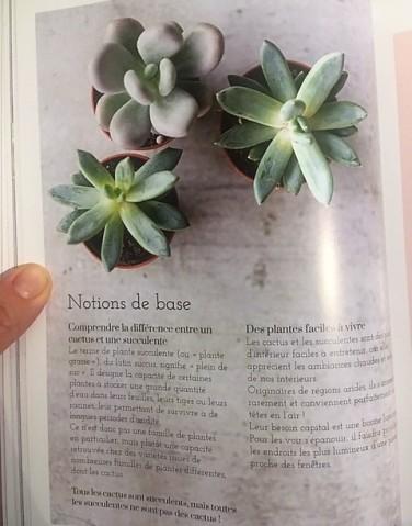 succulentes cactus végétale thérapie