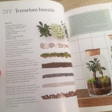 terrarium humide végétale thérapie